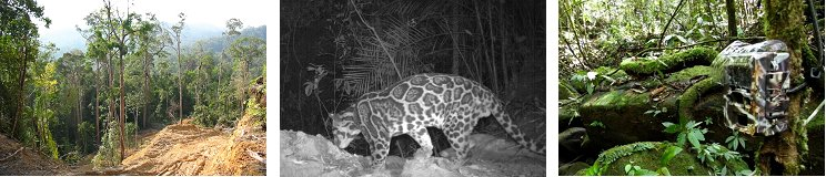 Camera-trapping animals in the Sela'an Linau Forest Management Unit