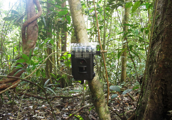 Camera-trap in field