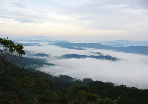 HOSCAP Borneo's Suvery Site: The Sela'an Linau FMU