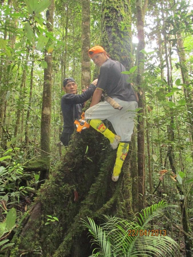 The HOSCAP Borneo field guides