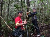Forest measurements