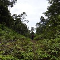 Old logging roads