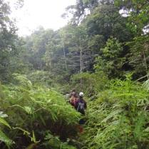 Overgrown logging road