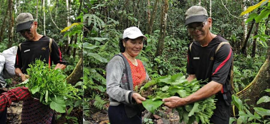 Friendly villagers from Long Main (Uncle Allen Bong and wife) giving us fresh veggies during the walk
