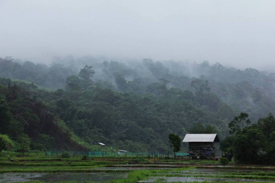 Rice fields in Long Lellang on a rainy morning