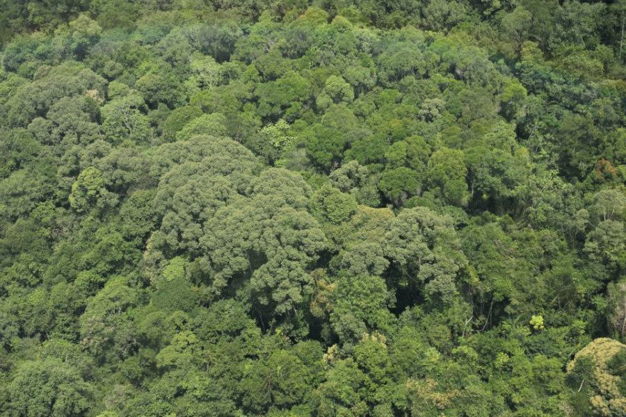 Bird's-eye view of pristine forests over Long Lellang