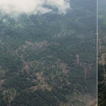 Forests scarred by human activities