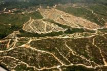 The pride of human enterprise - natural forests raped in the name of progress.