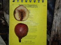 Measuring fruits with a Rite in the Rain notepad. courtesy of Peter Wimberger