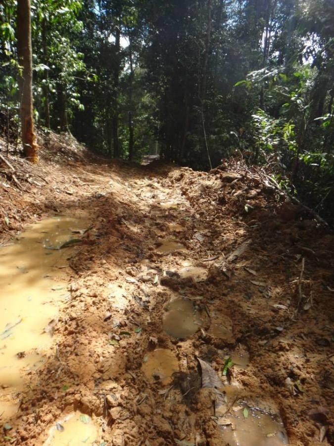 Fresh elephant tracks along an old logging road